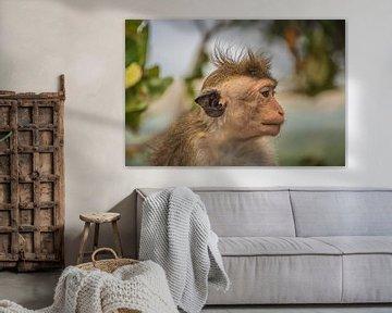 Affe in Trans von Maarten Borsje