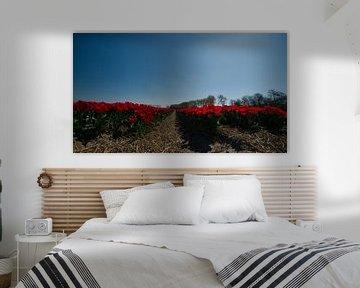 Tulpenveldje van Erik Reijnders