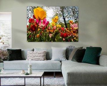 Tulpen richting de Zon von Brian Morgan