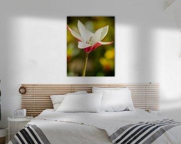 Fleur le Magnolia