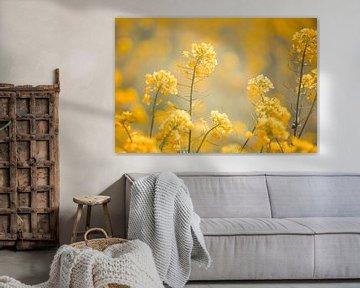 geel bloemenveld von Elke De Proost