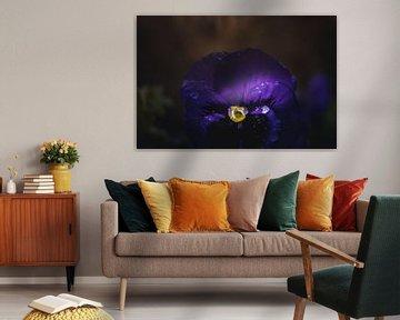Viola-Blume von Sandra Hazes