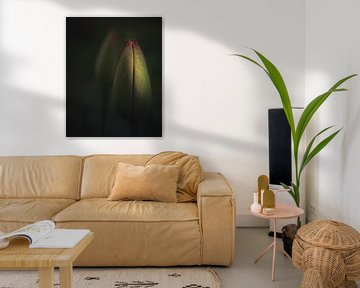 Geschlossene Tulpe von Sandra Hazes