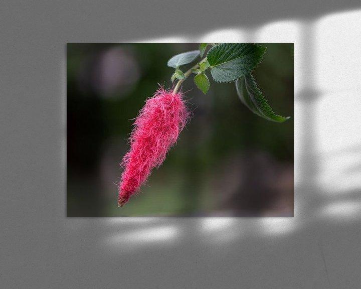 Sfeerimpressie: Rode Kattenstaart van Ingrid Aanen
