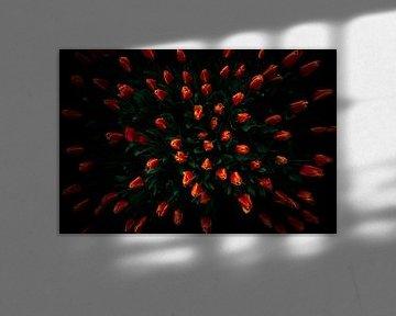 Fierté hollandaise, la tulipe
