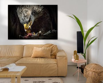 Der Weißkopfseeadler von Natascha Worseling