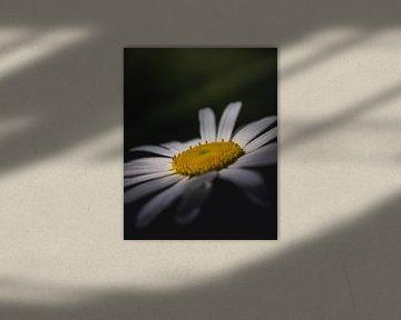 Daisy Up Close van Sandra Hazes