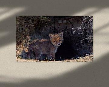 Junges Fuchsjunges von Natascha Worseling