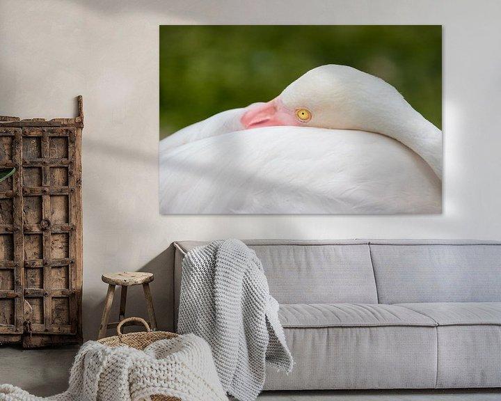 Beispiel: Ich beobachte dich - Flamingo von Thijs van den Broek
