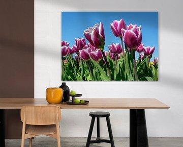Paarse tulpen tegen een blauwe lucht von Michel Knikker
