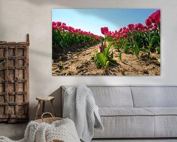 Tulpenveld in het rood von Michel Knikker