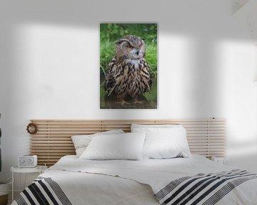 Owl No! van Kristof Piotrowski