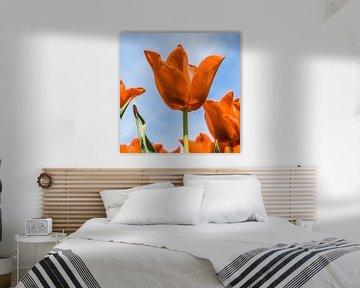 Oranje boven (Fijne Koningsdag)