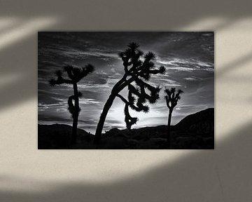 Joshua Tree 02