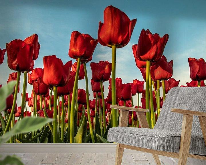 Beispiel fototapete: Holländisches Tulpenfeld. von Anjo ten Kate