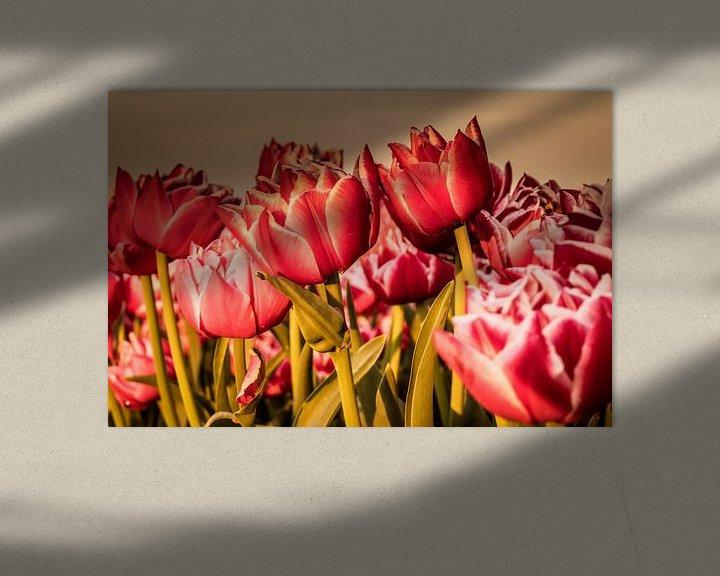 Beispiel: Holländisches Tulpenfeld. von Anjo ten Kate