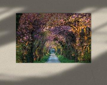Pink road 1 van Bart Ceuppens