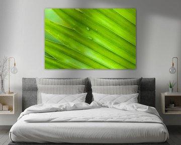 Groen tropisch blad met waterdruppels