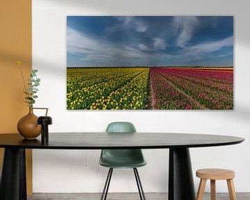 Tulpen op Texel sur Texel360Fotografie Richard Heerschap