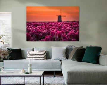 Tulpenveld voor de Molen van peterheinspictures
