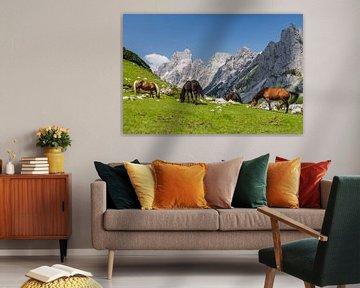 Paarden in de bergen van Coen Weesjes