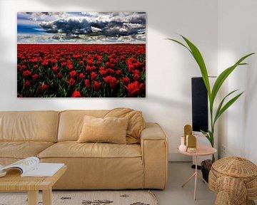 Rode Tulpen von Cho Tang