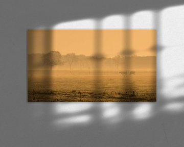 Kühe im frühen Morgen von Martzen Fotografie