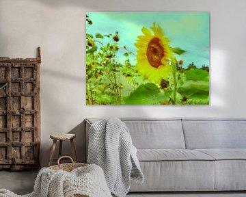 Sonnenblumen im Wind 1 von Andreas Gerhardt