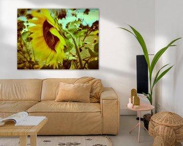 Sonnenblumen im Wind 4 von Andreas Gerhardt