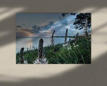 Bloeiende planten op de route cotiere bij Grands Sables, Belle Ile en Mer, Frankrijk von Arthur Puls Photography