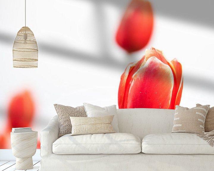 Beispiel fototapete: Tulpen auf einem weißen Hintergrund von Martijn Tilroe
