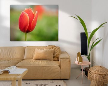 Tulipes avec un fond vert