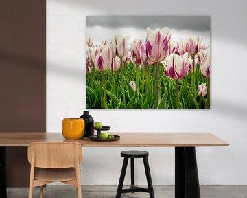 lila weiße Tulpenfeld von Martijn Tilroe