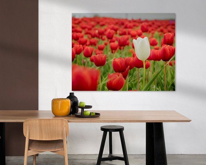 Beispiel: Rotes Tulpenfeld von Martijn Tilroe
