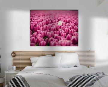 Champ de tulipes violettes