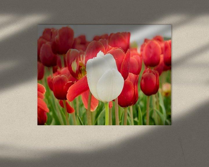 Beispiel: Weiße Tulpe vorne von Martijn Tilroe