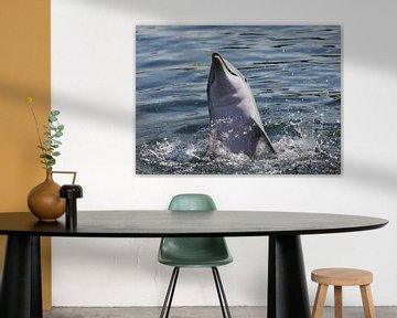 Spelende dolfijn van Joan Plaatsman