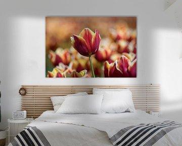 Tulpenliebe von Linda Lu