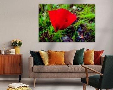 Rode bloem von Jane Changart