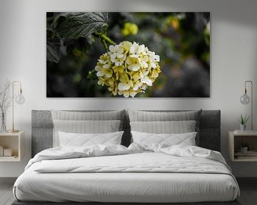 Witte bloemen van Jane Changart