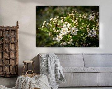 Bloemen von Jane Changart
