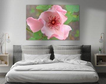 Roze Roos von Ronald Smits