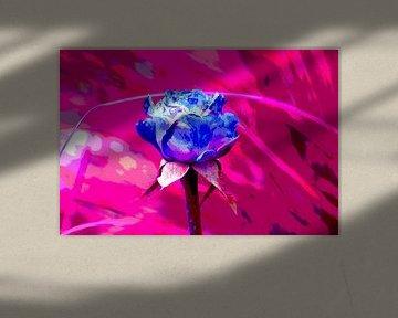Rose bleue sur Joke Gorter