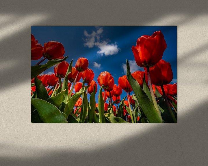 Sfeerimpressie: De tulpen in hollandse drie kleur van Albert Lamme