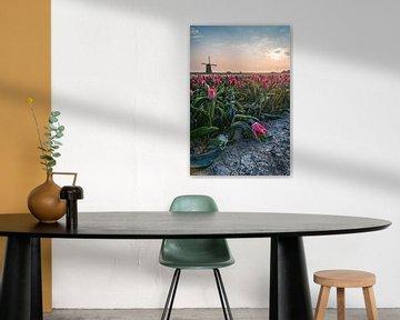 De molen en haar koude tulpen van Albert Lamme