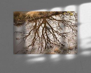 Boom weerspiegeling in plas water van Moïse Verzuu