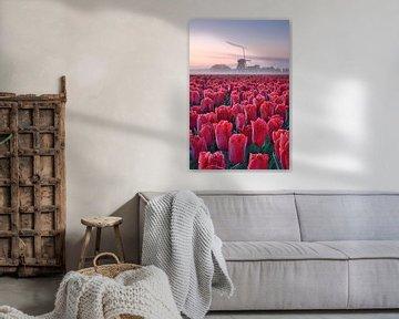 Tulpenveld met molen van John Leeninga