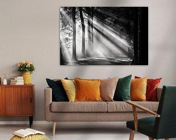 Zonnestralen schijnen over een boslaan in Amelisweerd van Arthur Puls Photography