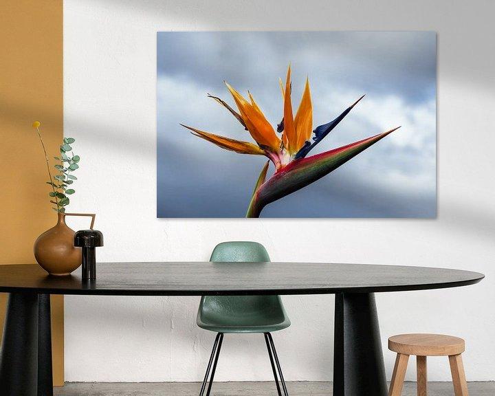 Sfeerimpressie: Bird of paradise flower in Funchal on the island Madeira, Portugal van Rico Ködder