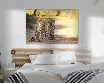 Three cheetahs, South Africa van W. Woyke